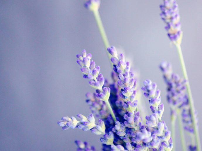 Back-to-School Aromatherapy Essentials
